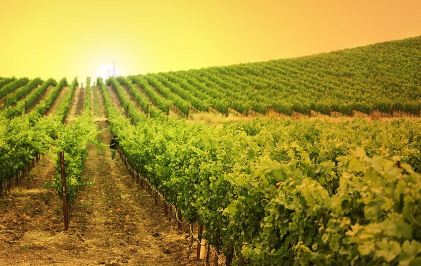 Desarrollo del turismo del vino